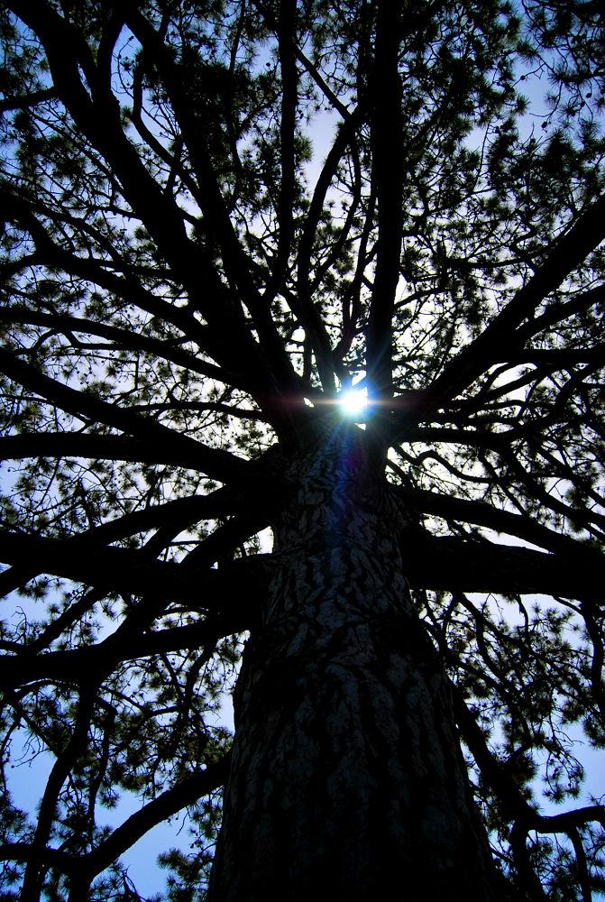 Photo in Nature #light #nature #tree