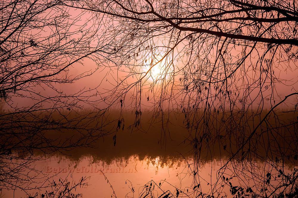 Photo in Random #betuwefotograaf #betuwe #holland #fog #mist #morning #hollandsunrise