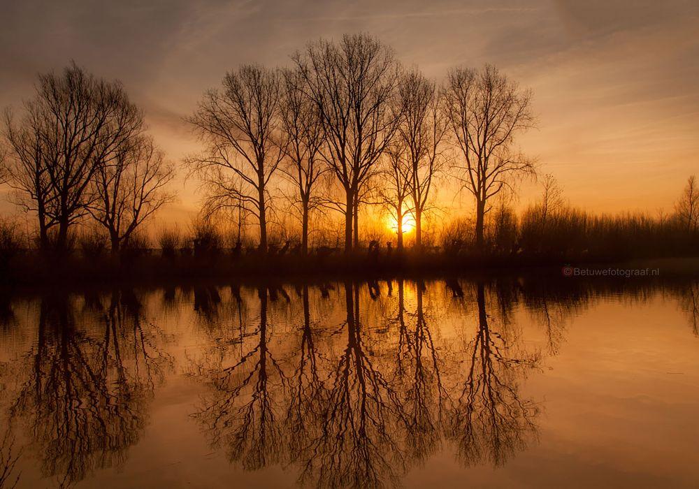 Photo in Nature #dutch #morning #holland #betuwe #betuwefotograaf