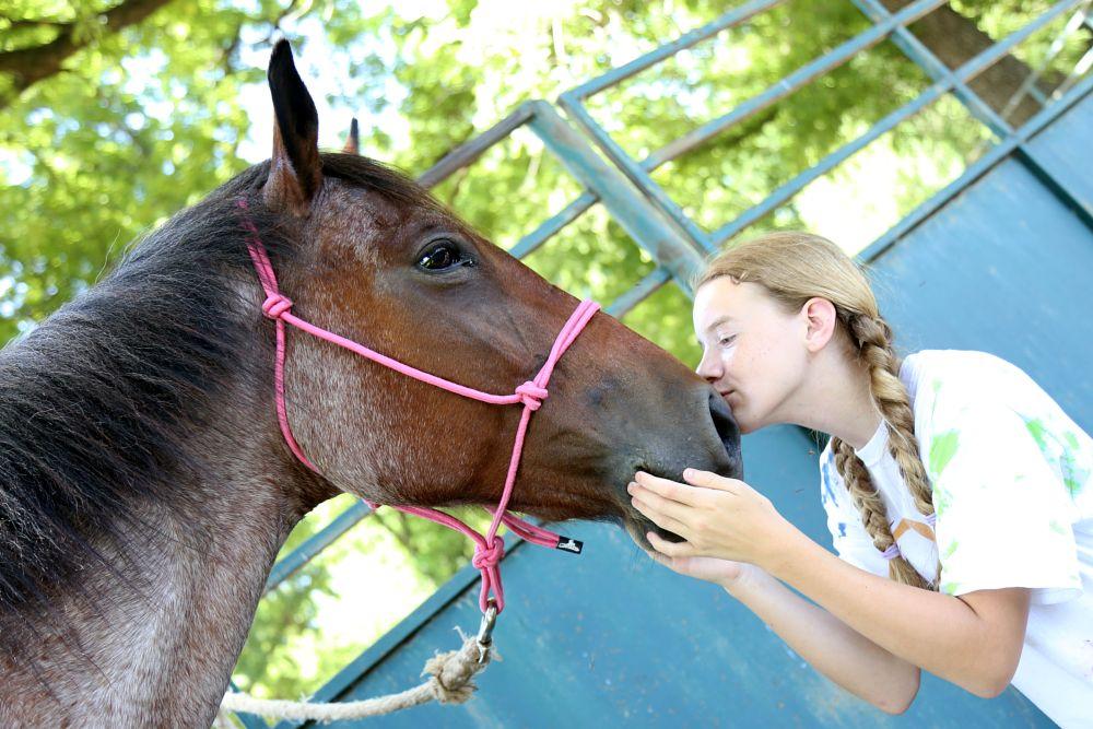 Photo in Animal #horse #ranch #oklahoma #charlenephillipsphotography #summer