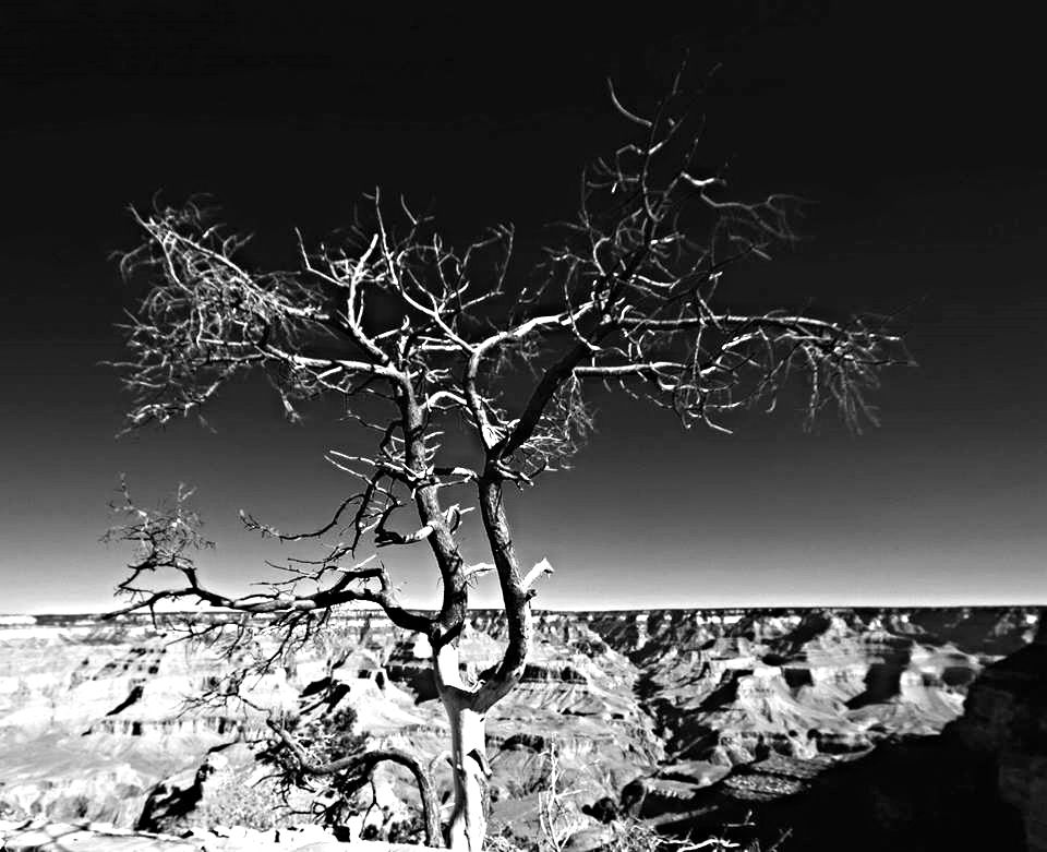 Photo in Black and White #grand canyon #black and whtie #aca photo