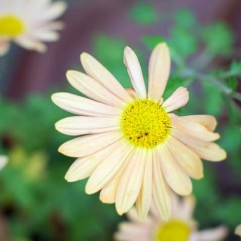 Photo in Random #flower #nature