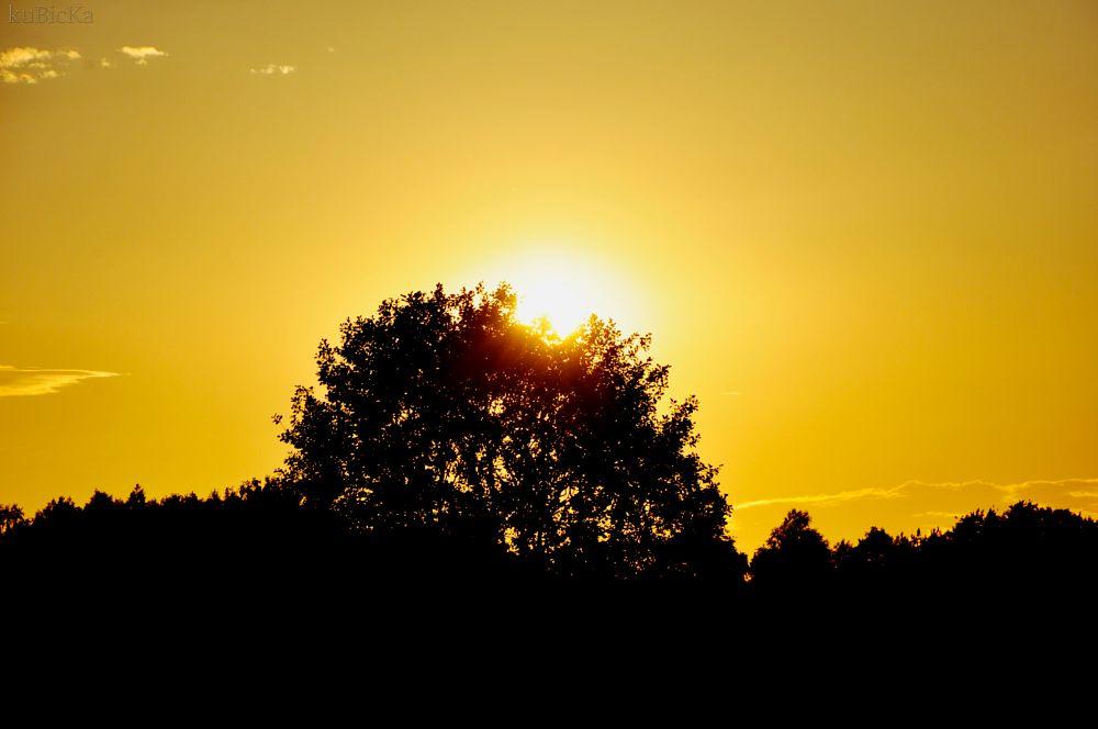 Photo in Nature #yellow #sky #summer #holiday #tree #black #nikon #nikond5000 #nikkor #nikkor18-135 #18-135