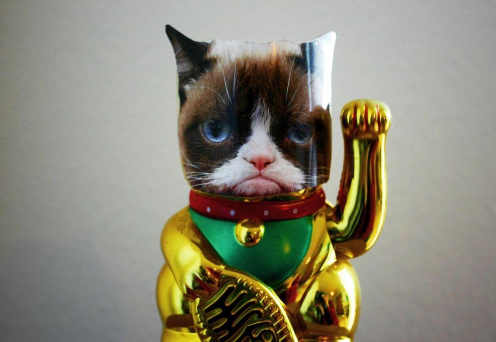 Photo in Random #grumpy cat #decoration #random #serious #blue eyes #religion #portrait