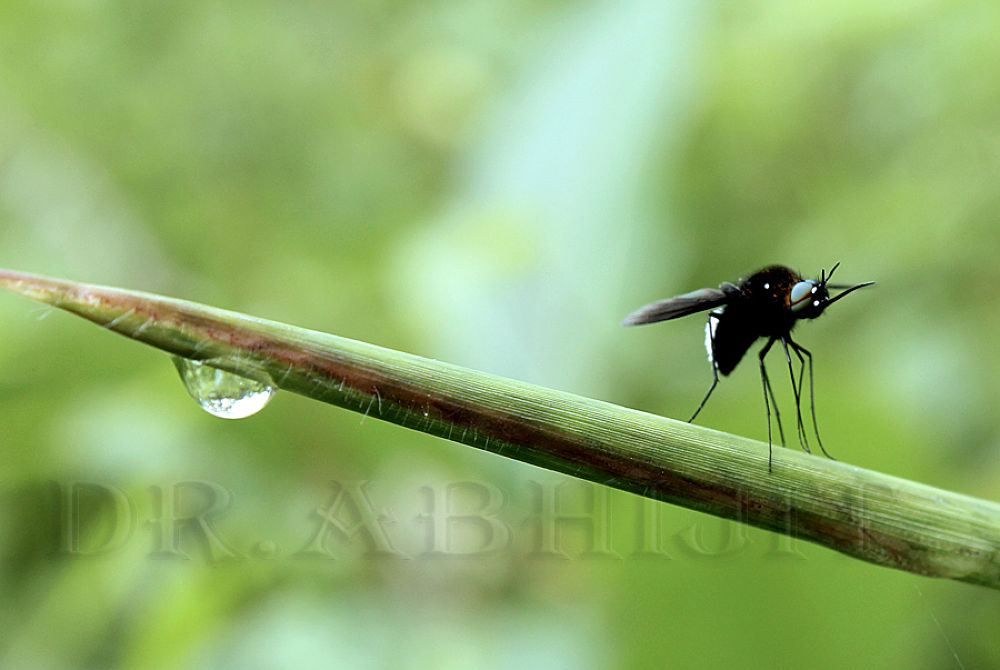 Photo in Nature #macro #closeup #nature #wildlife #insect #canon