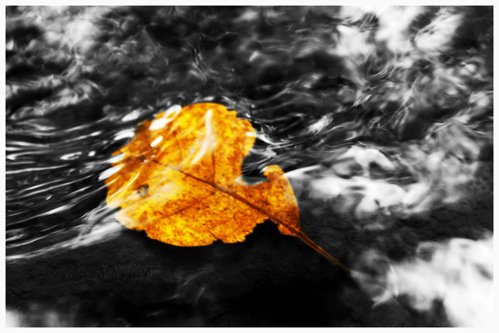 Photo in Random #canon #underwater