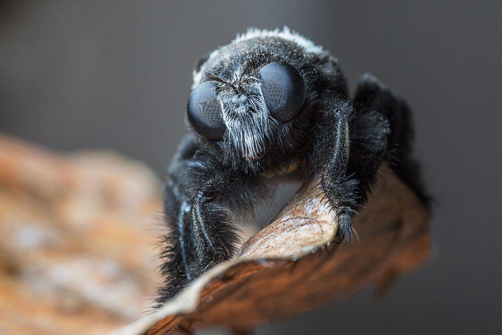 Photo in Macro #bee #africa #malawi