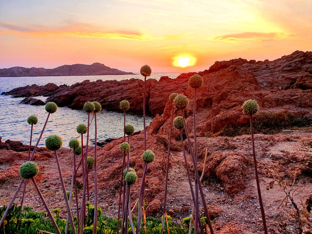 Photo in Landscape #landscape #italy #flowers #mountain #wildlife #amazing #sunset #colors #climbing #ocean #summer #joy #happiness #capture #sky #clouds #nature #photography