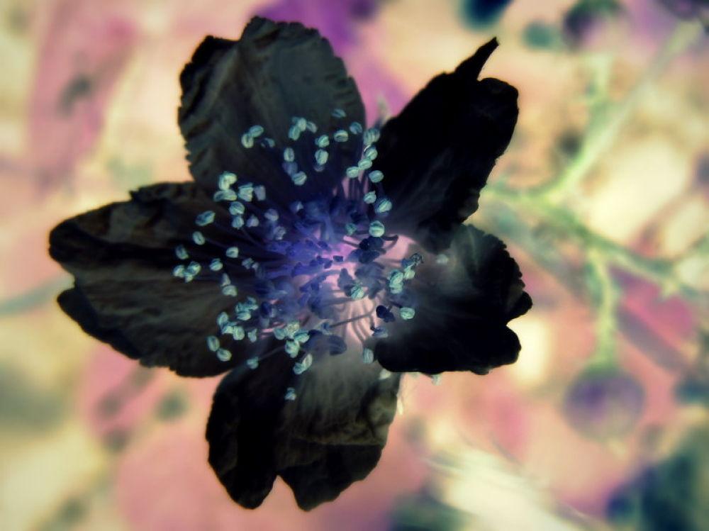 Photo in Random #flores diferentes por angell g