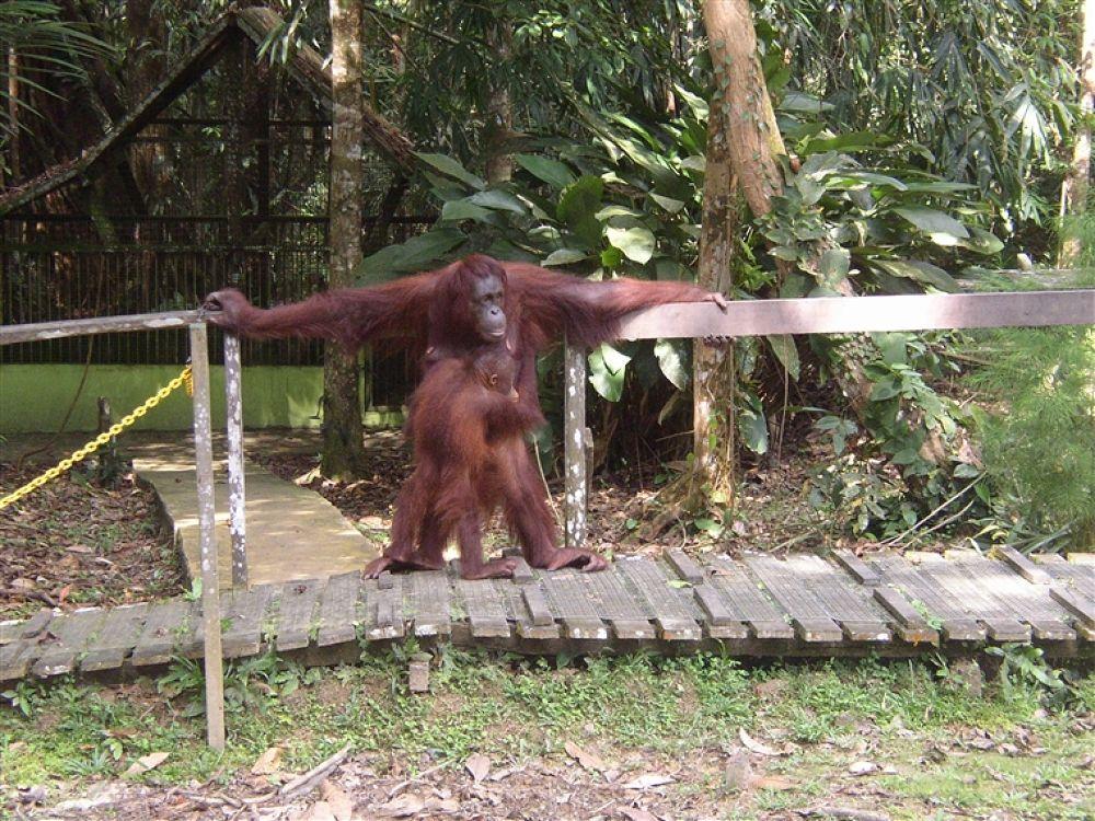 Photo in Random #orangutang