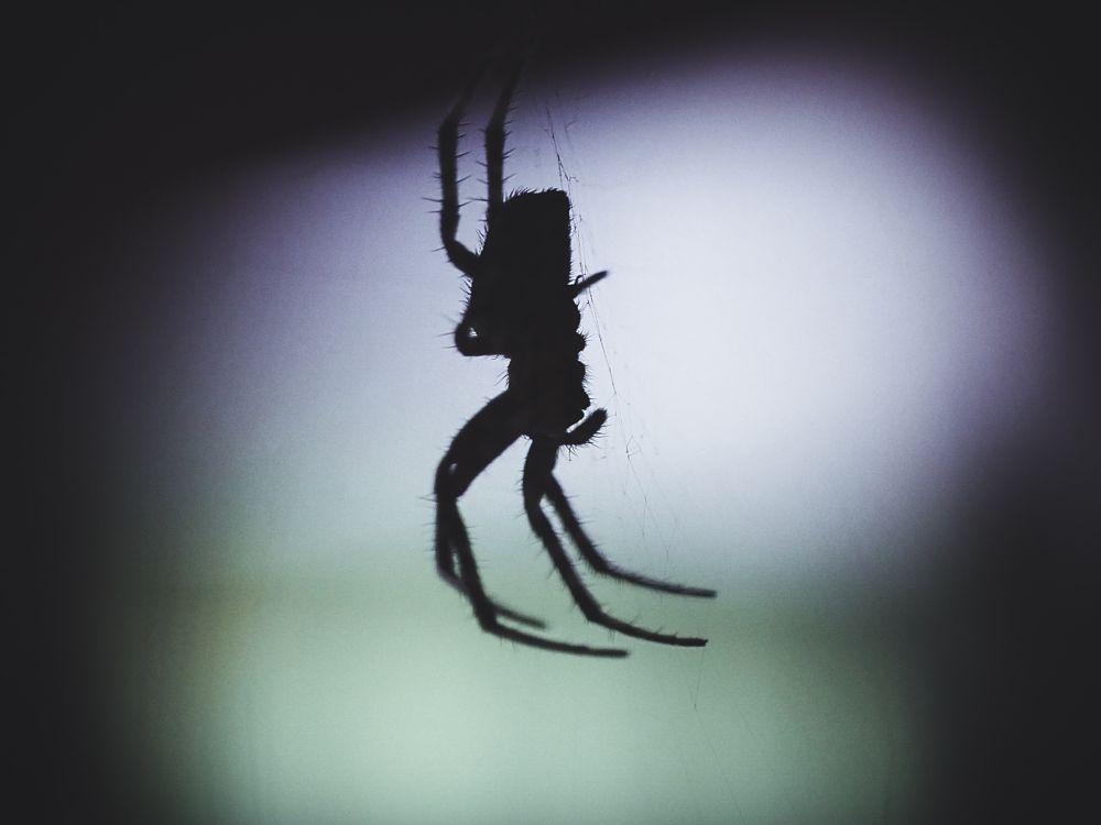 Photo in Nature #spider #macro #arachnid