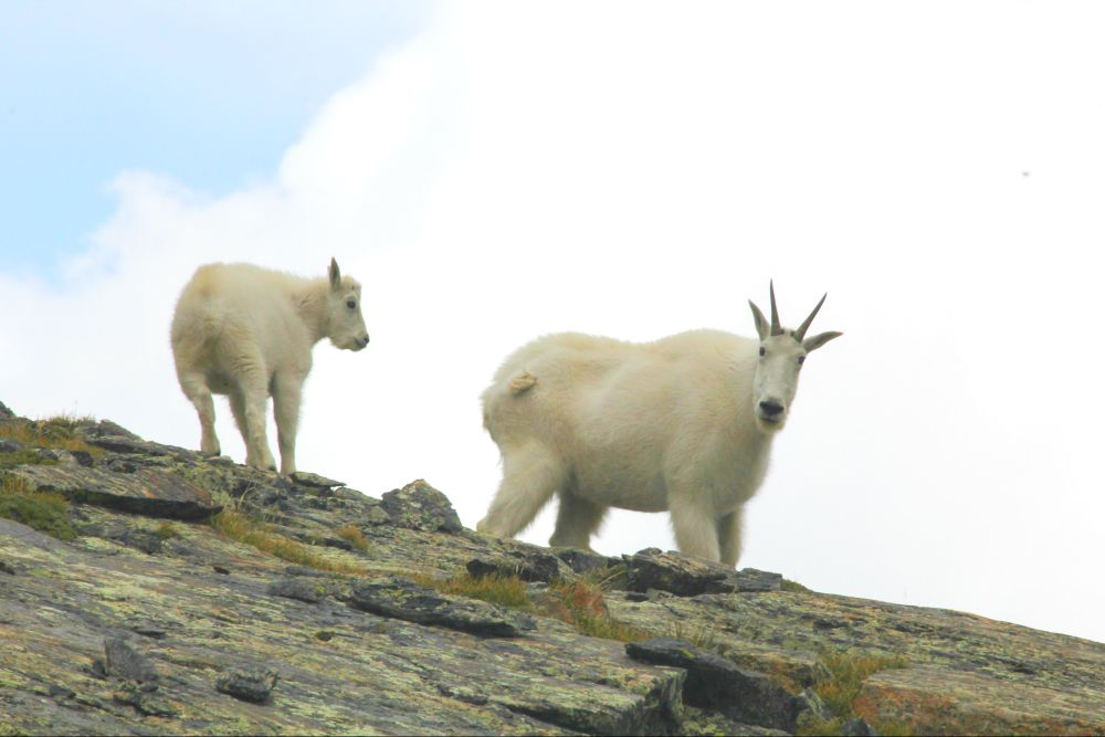 Photo in Animal #wildlife #colorado #animals