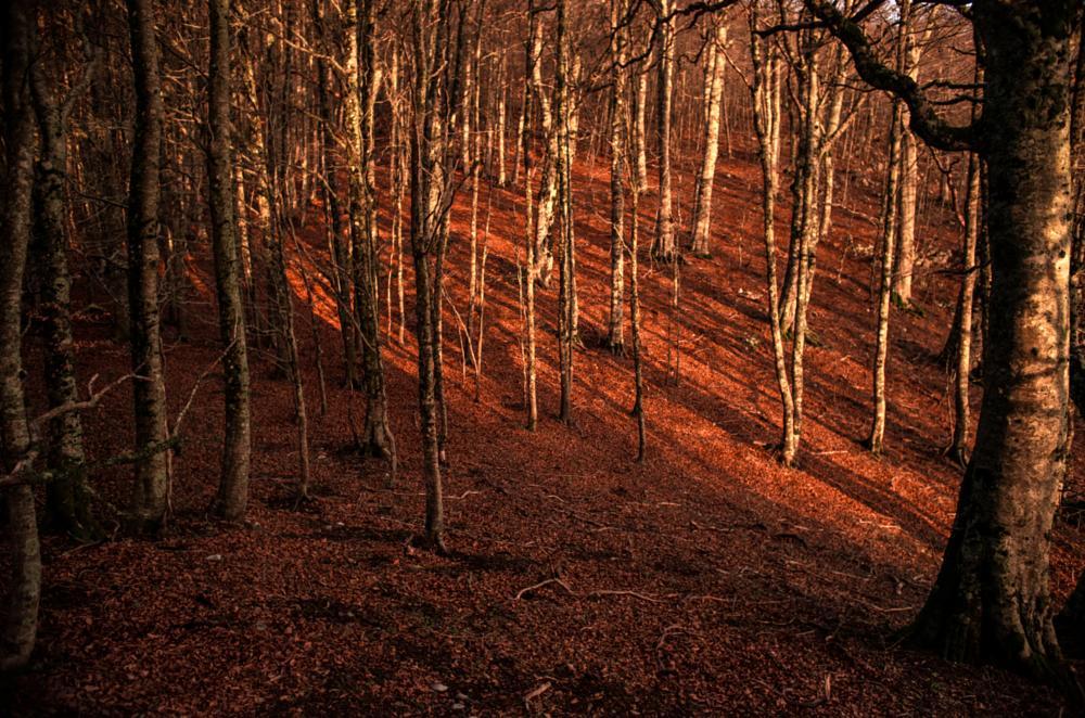 Photo in Landscape #montagna #tramonto #landscapes #pollino #basilicata #nature #natura #monti #alberi