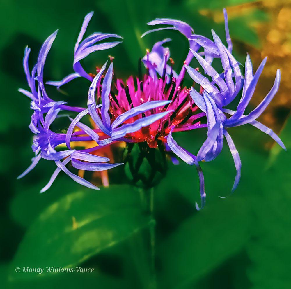 Photo in Random #nature #flowers flower