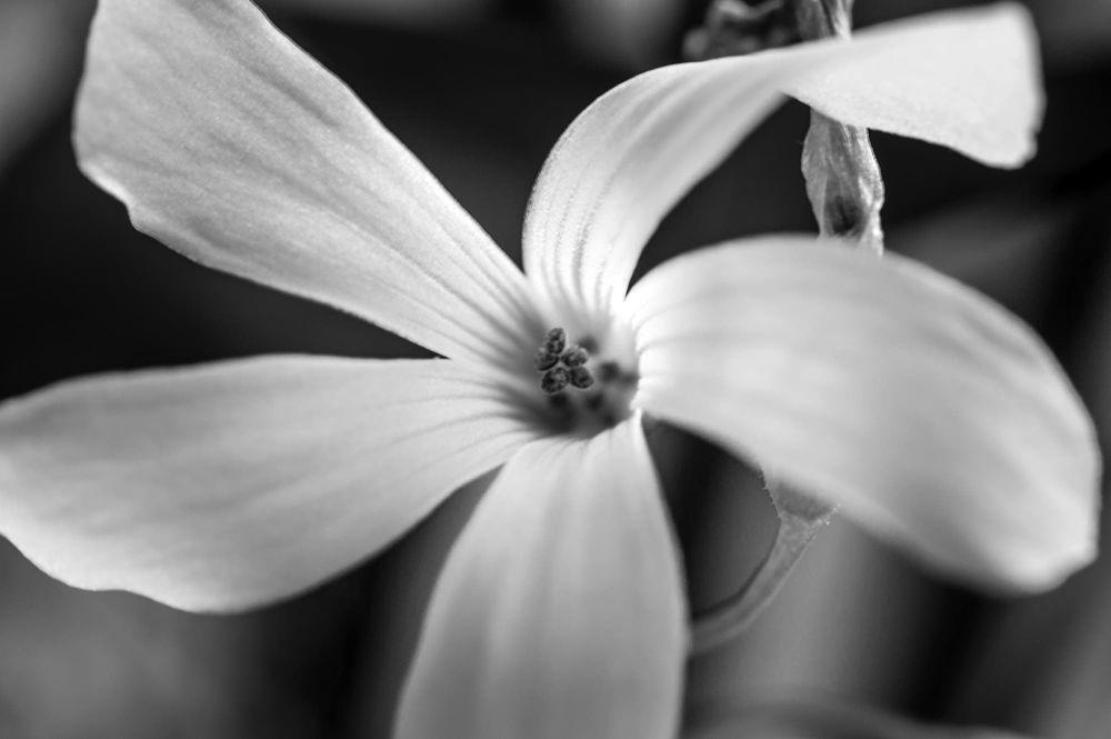 Photo in Macro #flower #nature #nikon #garden #macro #white