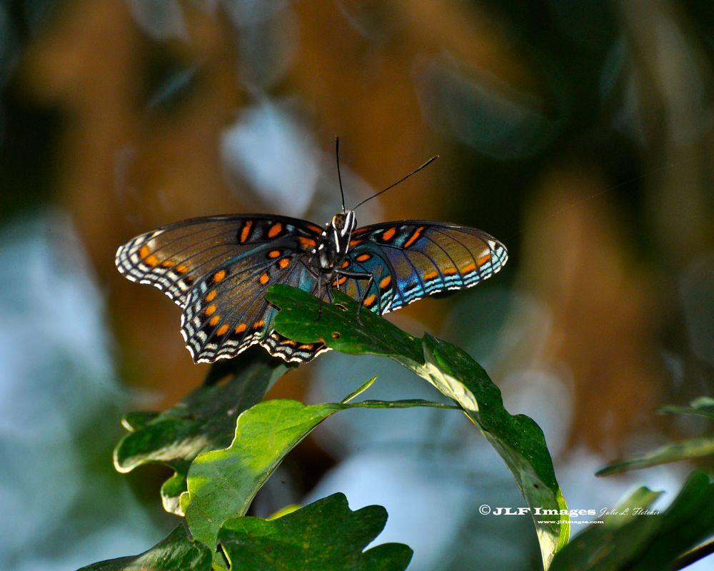 Photo in Macro #butterfly #butterflies