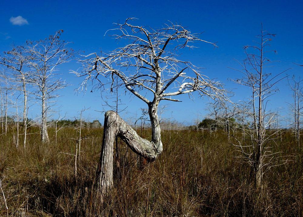 Photo in Random #tree #plant #nature #everglades #florida #landscape