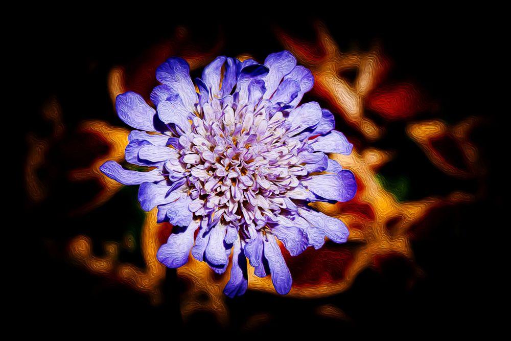 Photo in Random #violet #flower #mariposa violet