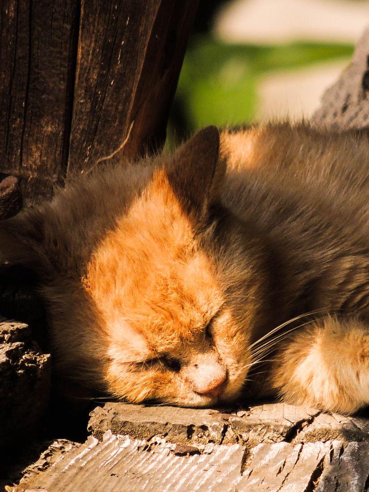 Photo in Animal #animal #cat #sleep