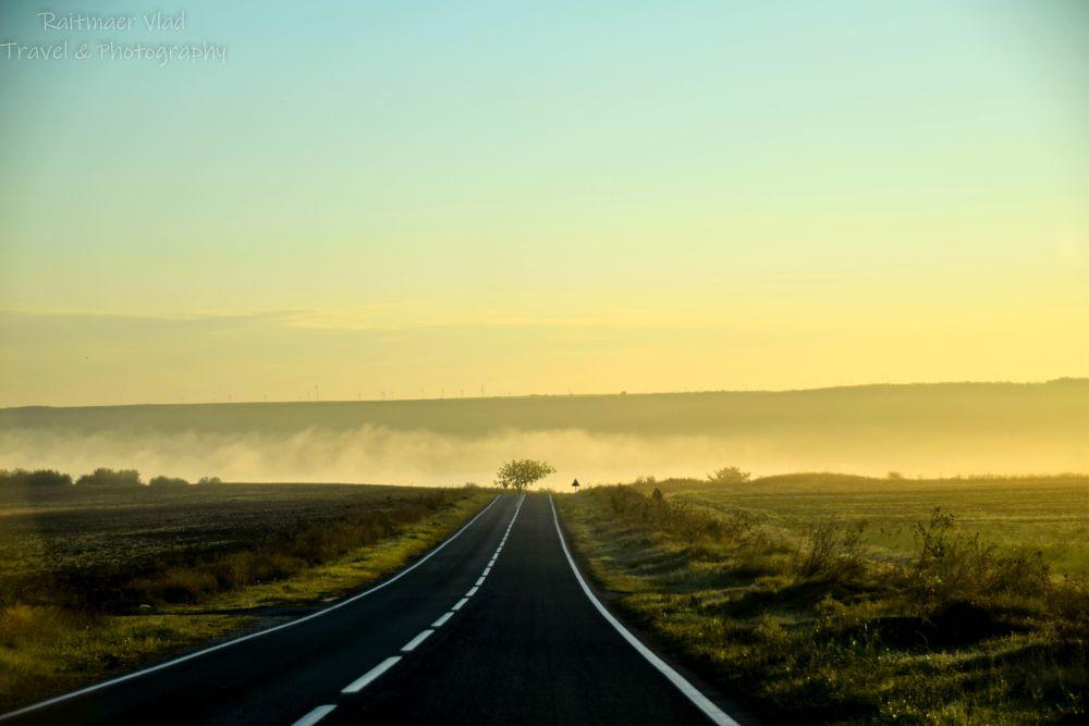 Photo in Landscape #landscape #golden hour #golden #trees #road #car #moving #travel #hitchhiking