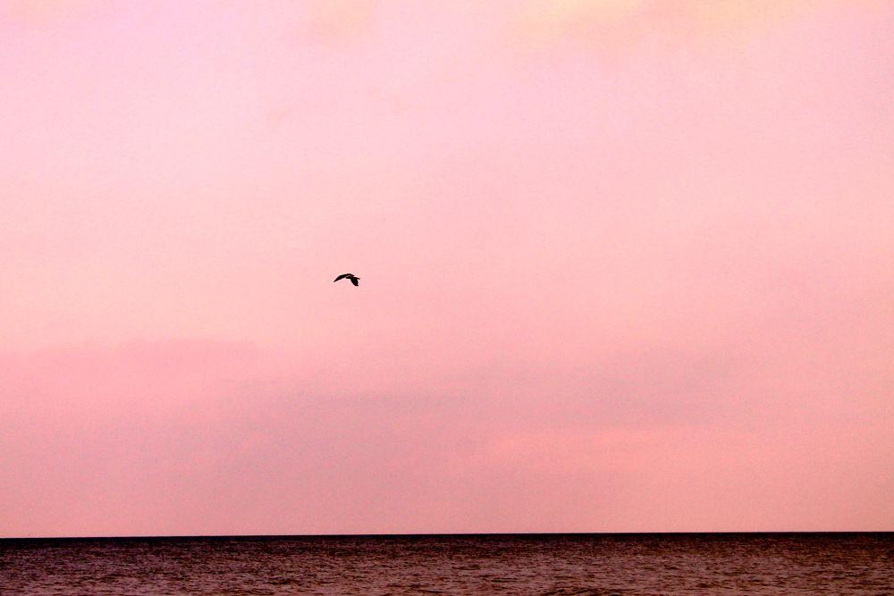 Photo in Random #sunset #bird #sweden #nature