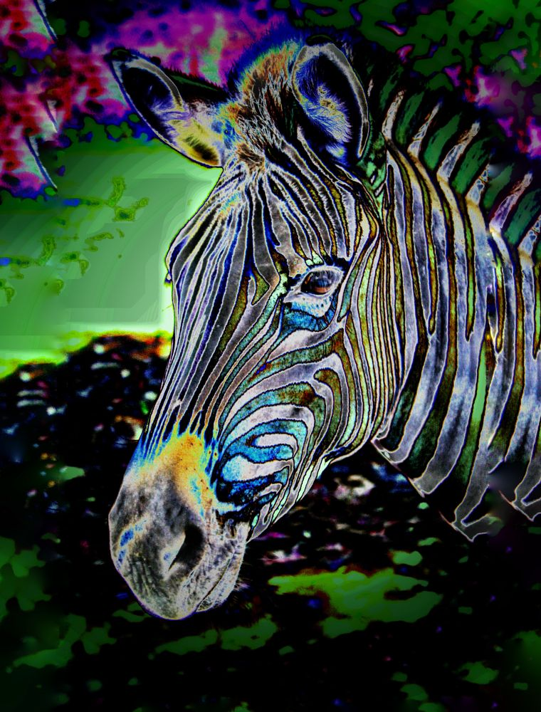 Photo in Random #zebra #animal #photoart #photography