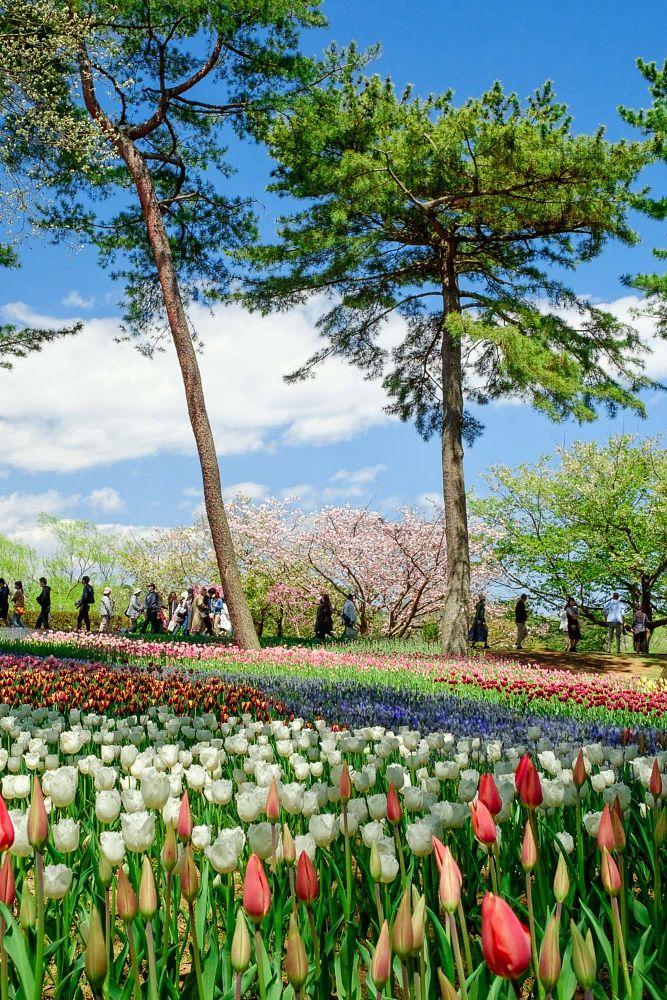 Photo in Travel #flowers #colors #ibaraki #hitachi #japan