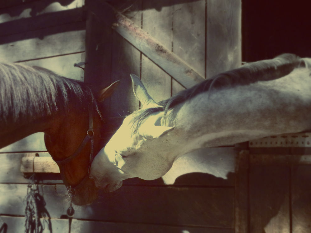 Photo in Animal #horse #animal #nature #faune #cheval