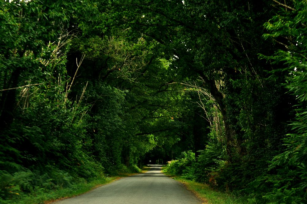 Photo in Nature #tree #nature #road #tunnel