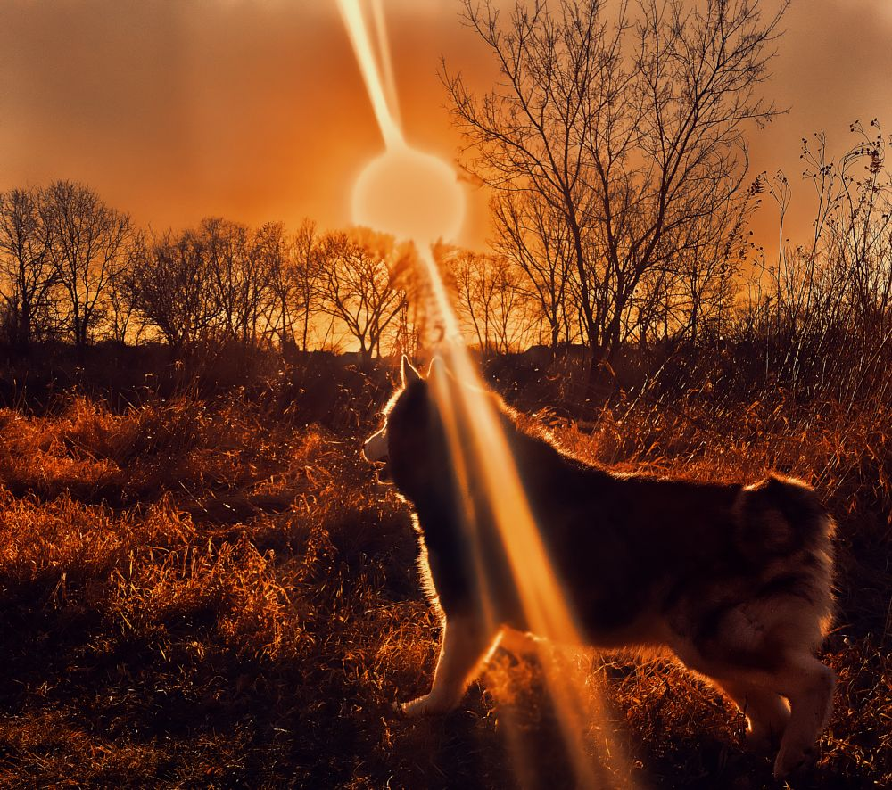 Photo in Nature #dog #sunset #fall #autumn #orange #warm #color #forest #animal #nature
