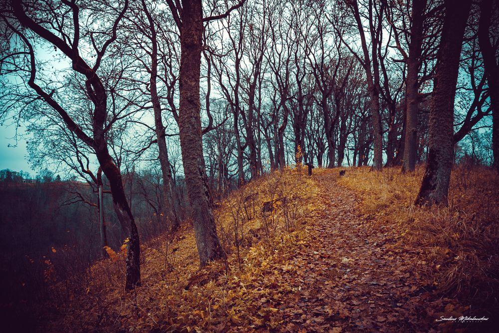 Photo in Nature #path #oak #trees #autumn #leaves