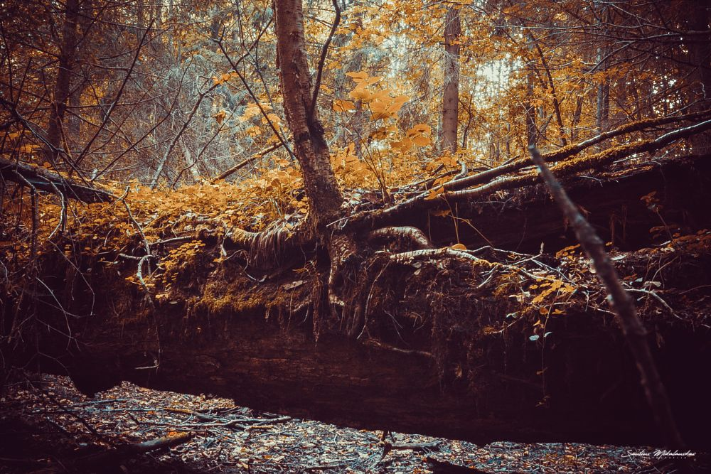 Photo in Nature #trees #forest #autumn