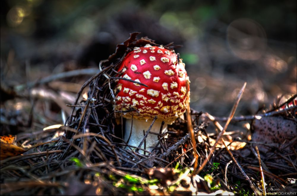 Photo in Nature #toadstool #fungi #wood #forest #mushrooming