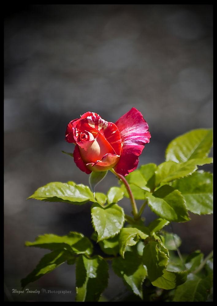 Photo in Portrait #nature #flowers #publicity #random