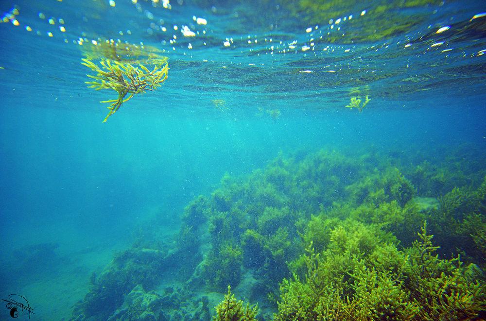 Photo in Underwater #underwater #joy #colors #nature #beauty