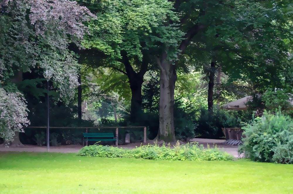 Photo in Nature #garden #bench #trees #nature #park