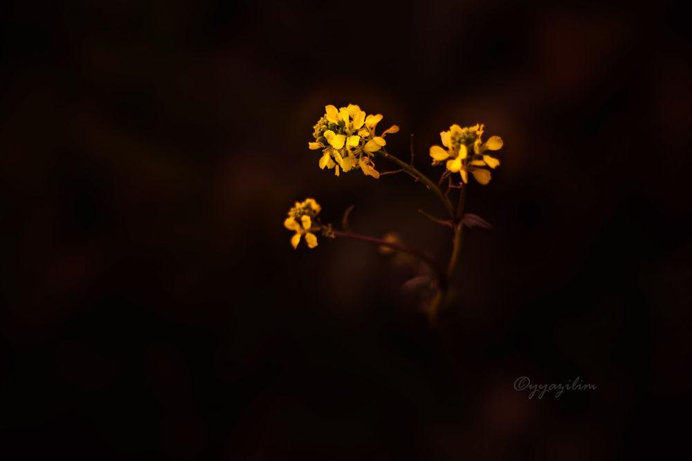 Photo in Random #yyazilim #ibrahim #i̇brahim #yildiz #yıldız #doğa #çiçek #hardal #turp