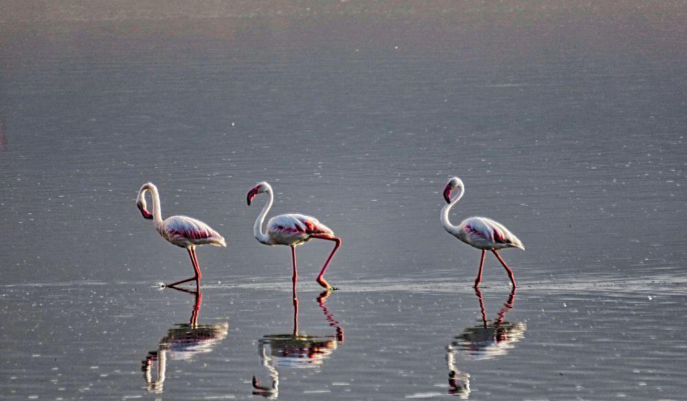 Photo in Nature #birds #reflection #flamingo #africa #kenya #amboseli #wildlife