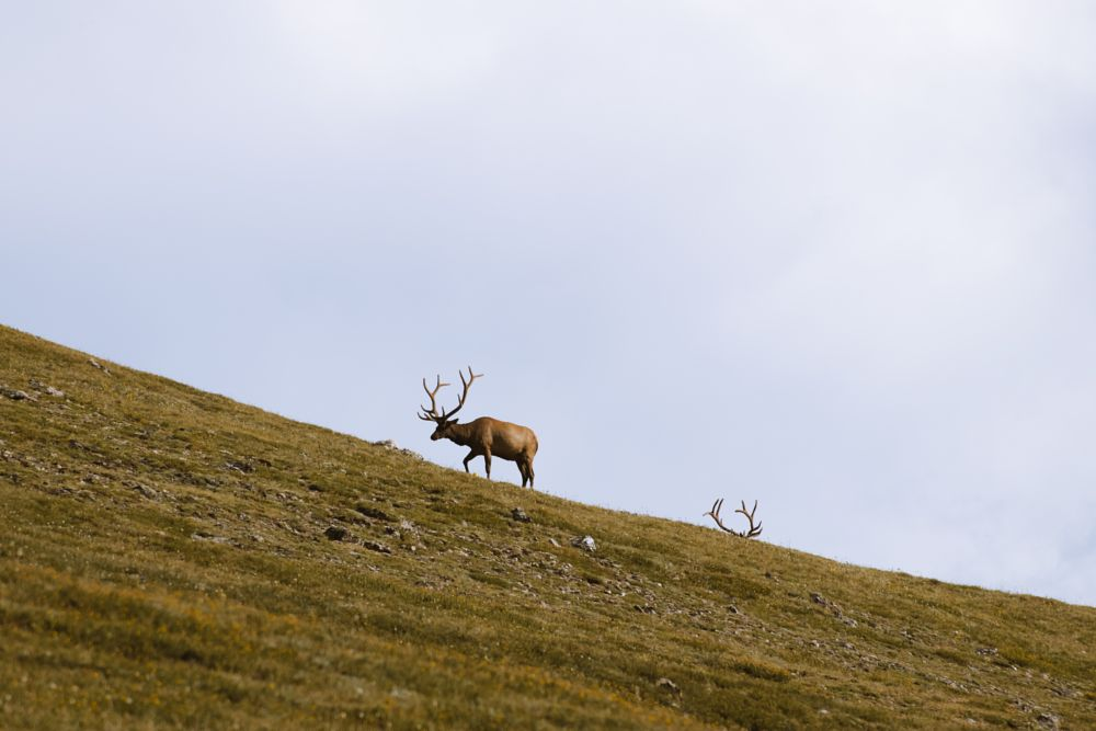 Photo in Nature #nature #animals #elk #landscape #colorado #national park #rocky mountains