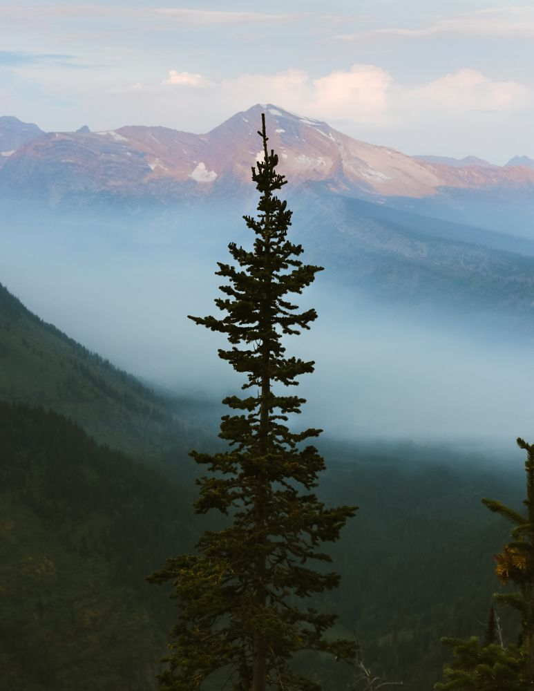 Photo in Nature #nature #tree #landscape #mountain #hiking #glacier #nationalpark #backpacking
