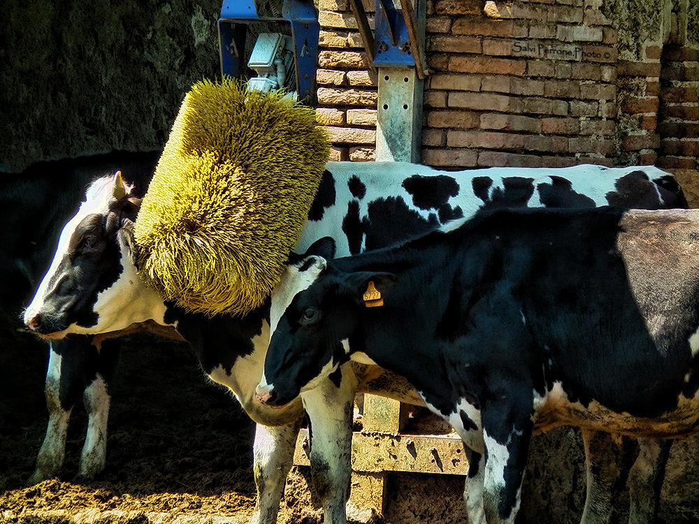 Photo in Animal #animali #hdr