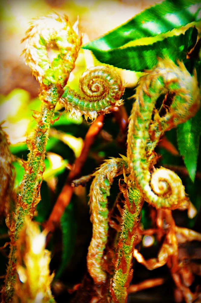 Photo in Nature #fiddle heads #spring #green #forest #ferns #random