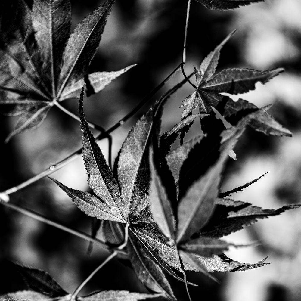 Photo in Random #100 mm #france #abstract #b&w #black & white #composition #essai #fiore #fleur #flower #garden #glycine #iris #jardin #macro #n&b #nature #noir et blanc #plant #rose