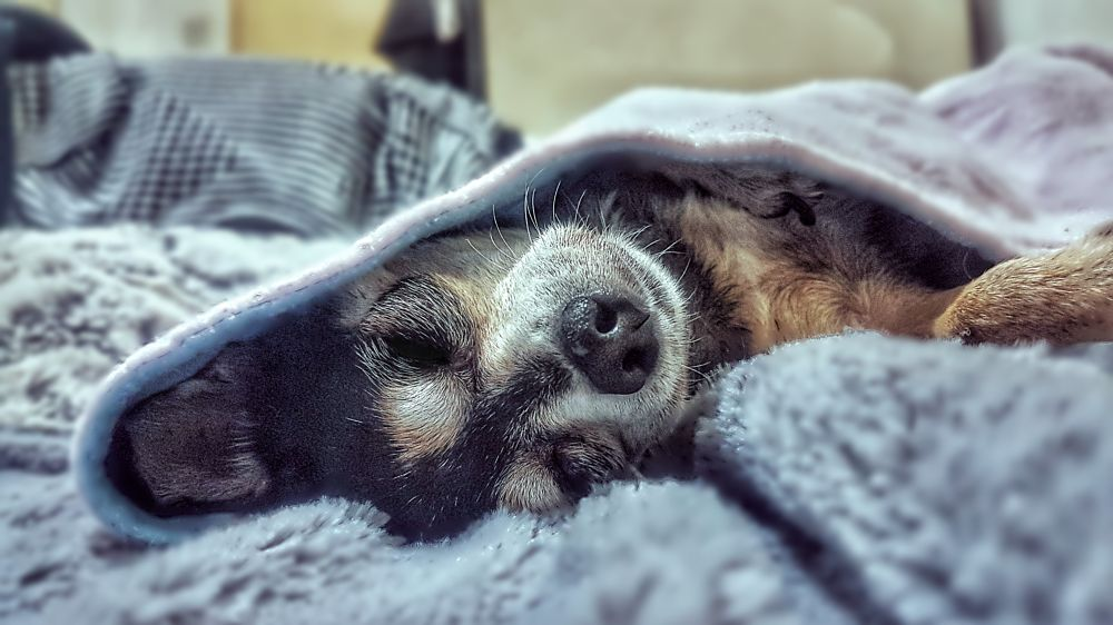 Photo in Random #dogs #animal #chihuahua #pet