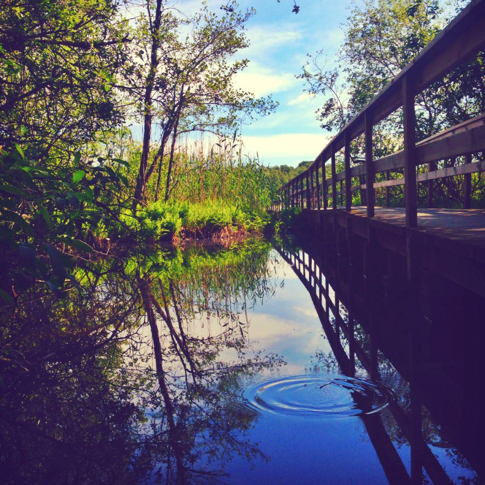 Photo in Nature #sweden #stockholm #nature #dashable #reflection #lake #adventure