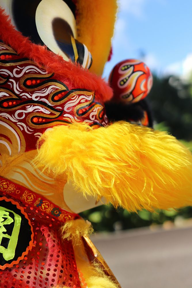 Photo in Random #lion #lion dance #chinese new year #celebrations