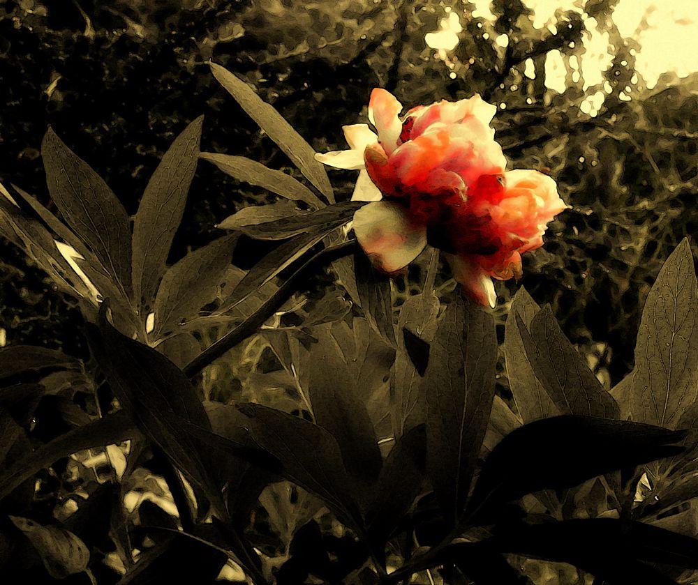 Photo in Nature #feuilles. #lumière #fleur