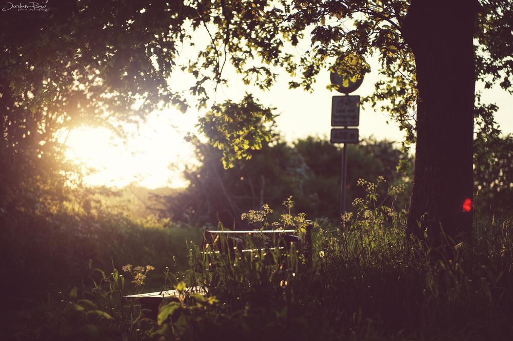 Photo in Nature #bench #sun #sunset #tree #gras #nature #light #flower #jordan #raw