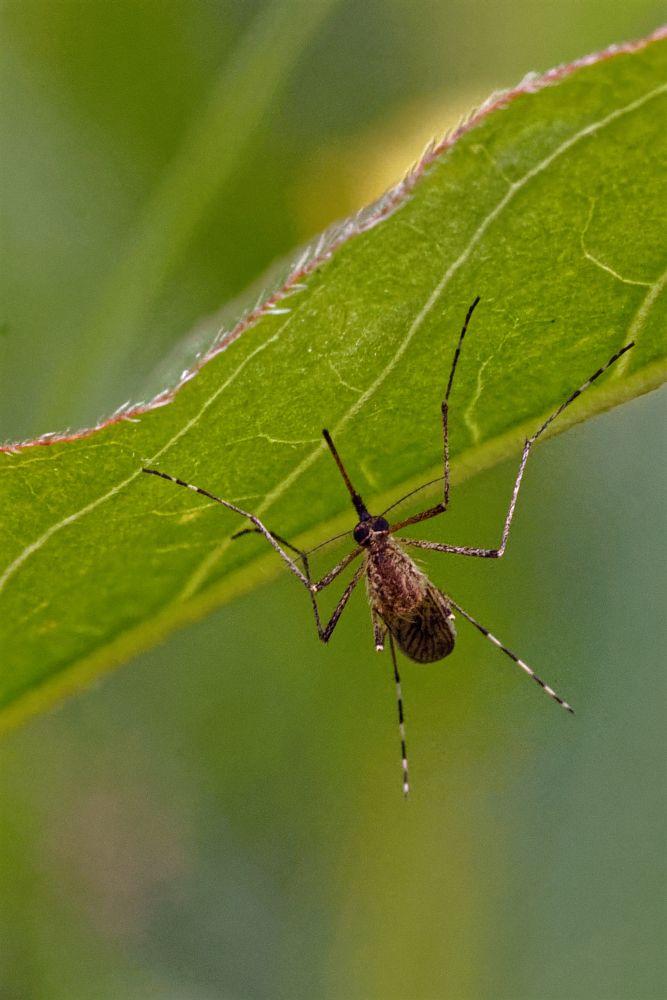 Photo in Macro #insect #bug #sucker #proboscis