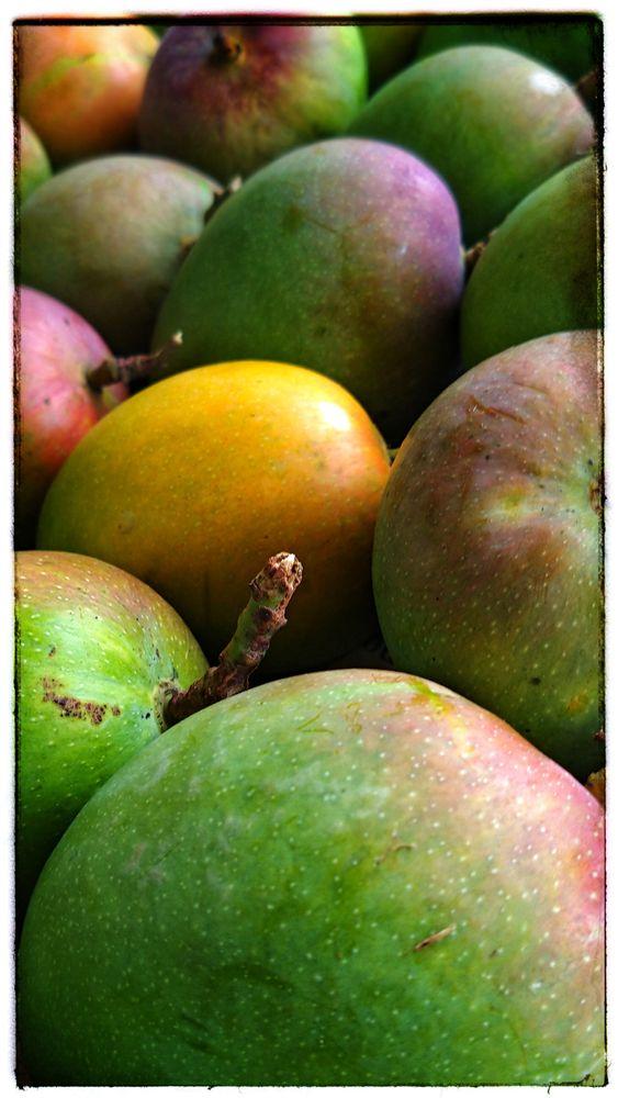 Photo in Food #food #fruit #mango #alphonso #healthy #close up #sweet #dessert #yellow #summer #dish #freshness #fresh